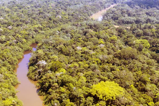 FactCheck: is protecting global rainforests the best way to rapidly tackle climatechange?