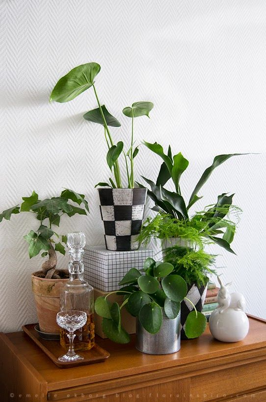 Urban Jungle Bloggers: My Plant Gang by @florainspiro