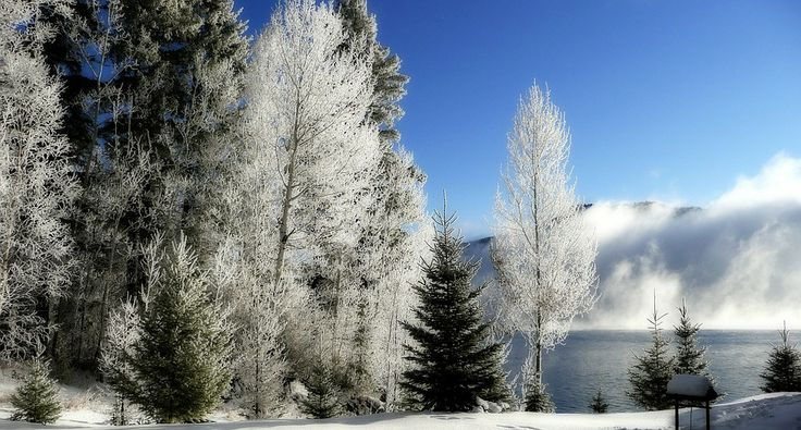 Winter wonderland at the Canim Lake, Canada