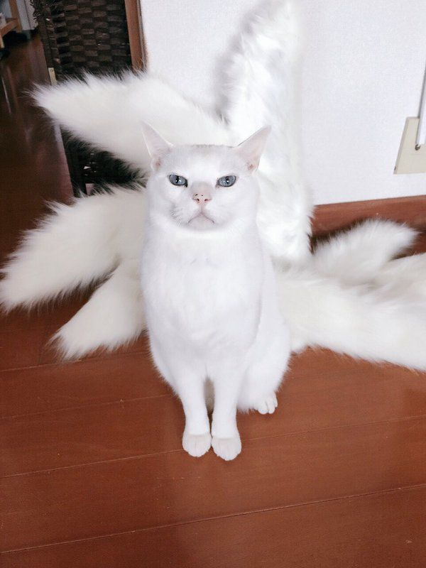 White cat doesn't seem to like the extra tails