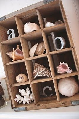 Use an old soda crate to create a vertical shadowbox to display seashells and sealife. #Shells #Coral #Beachhousedecor #Organized #Memorabilia