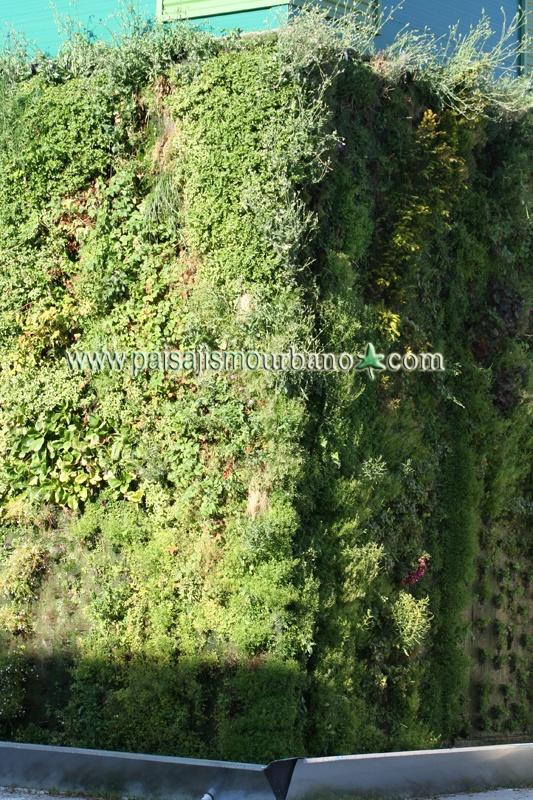 7 best ecosistema vertical getafe madrid images on for Paisajismo madrid