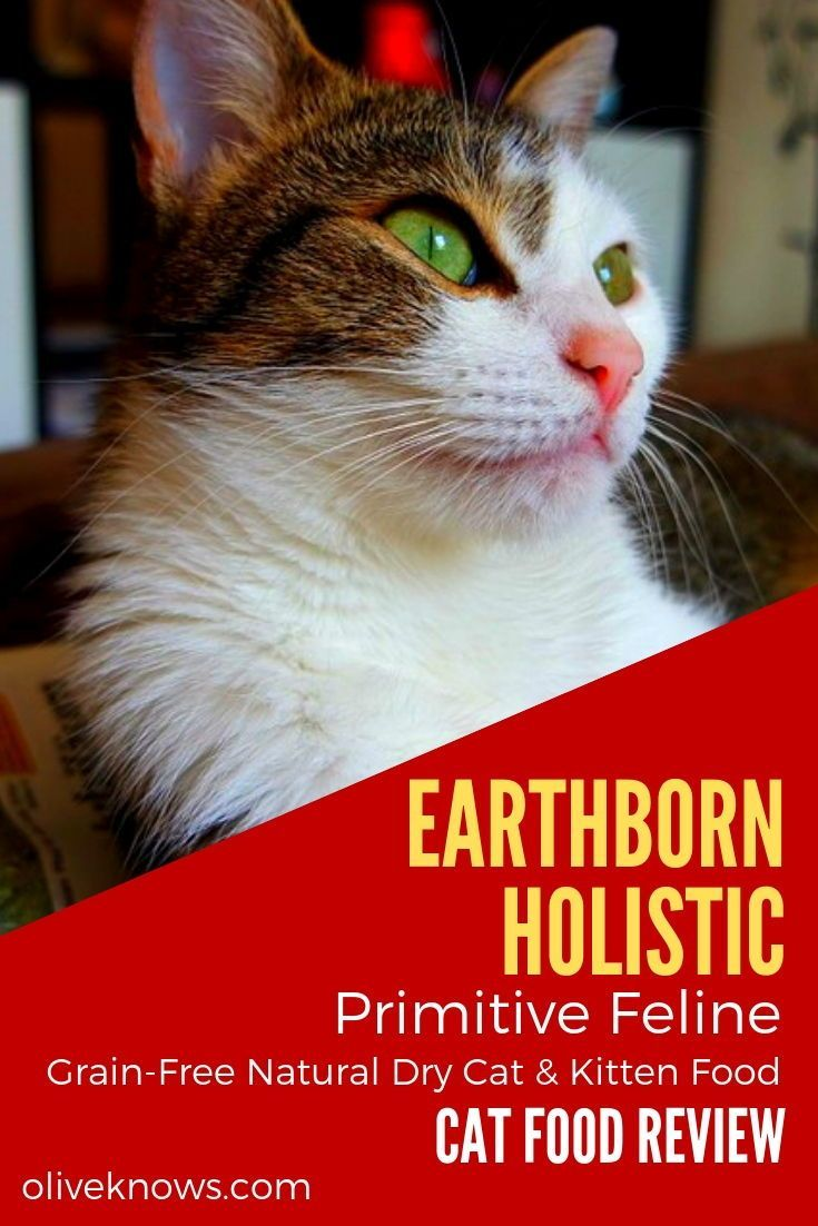 Earthborn Holistic Primitive Feline Grain Free Natural Dry Cat Kitten Food Review Oliveknows Kitten Food Cat Food Cat Food Reviews