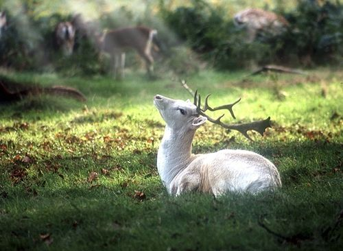 The stag raised its head, welcoming the warm beams of sunlight which brought warmth and light.
