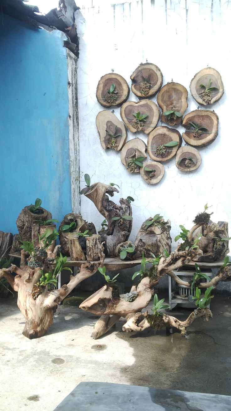 Driftwood Orchid Plant