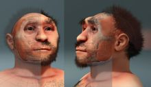 Peking Man - Forensic facial reconstruction of Homo erectus pekinensis Wikipedia, the free encyclopedia