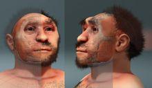 Peking Man - Forensic facial reconstruction of Homo erectus pekinensis Wikipedia, the free encyclopedia