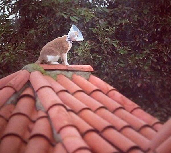 Instalando antena parabólica en el tejado.