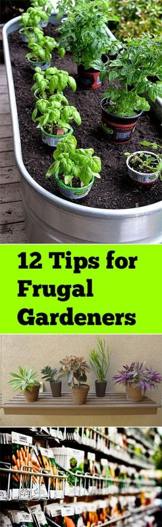 12 Tips For Frugal Gardeners. Herb GardeningContainer ...