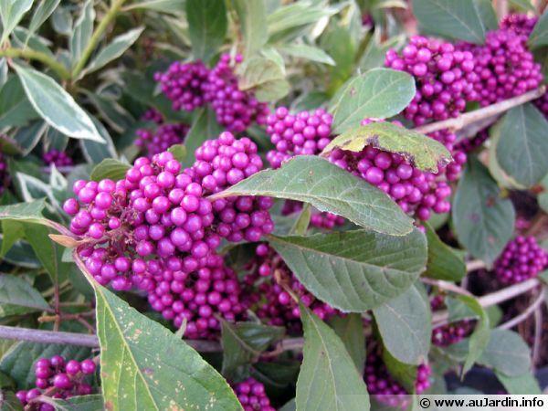 Plantes décoratives