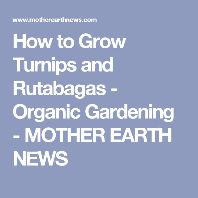 How to Grow Turnips and Rutabagas - Organic Gardening - MOTHER EARTH NEWS