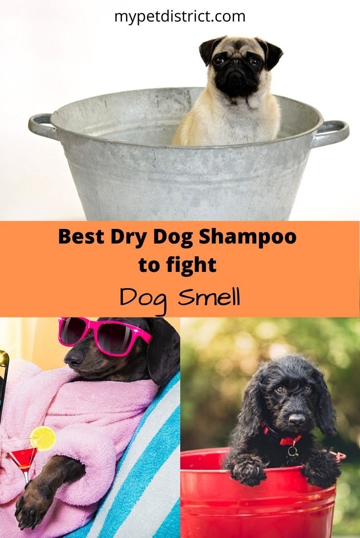 Get Rid Of Dog Smell Now Dog Shampoo Dog Smells Dry Dog Shampoo