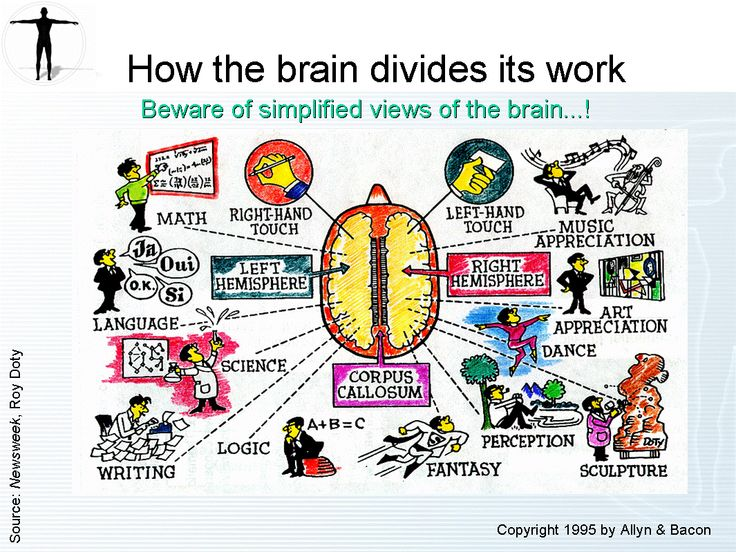 the workings of the brain