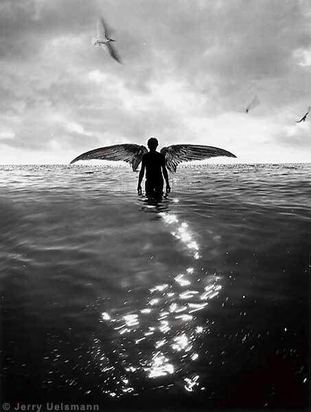 No cortes las alas de tus sueños, porque ellos son el latido del corazón y la libertad de tu alma