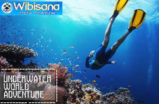 Fun Diving in Bali: Enjoy Amazing Underwater World of Tanjung Benoa, Tulamben or Padang Bay starting at Rp249.000 instead of Rp750.000 - Exclusively and only at www.MetroDeal.co.id