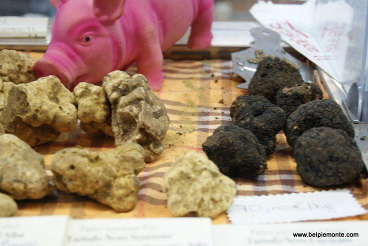whire and black truffles during Alba International White Truffle Fair 2014, Alba, Piedmont, Italy