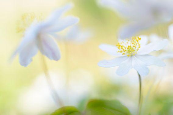 Nieuw in mijn Werk aan de Muur shop: spring is in the air