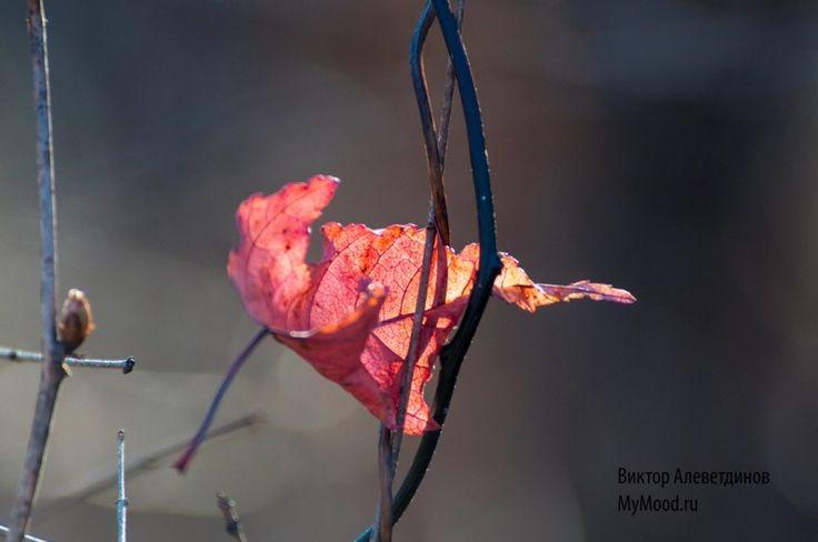 Красные листья и иней на реке Кия, Дальний Восток, Хабаровский край, район им. Лазо