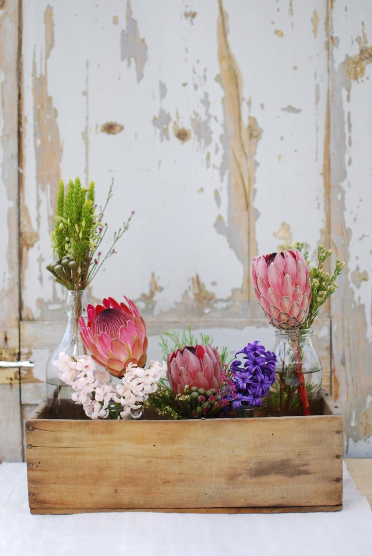 Western Cape fynbos and proteas