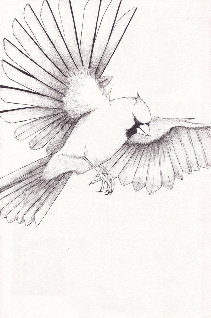 Cardinal - Coloring Pages & Pictures - IMAGIXS