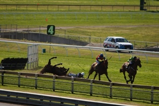 Ask Coopers Brewery to Stop Supporting Cruel Jumps Racing