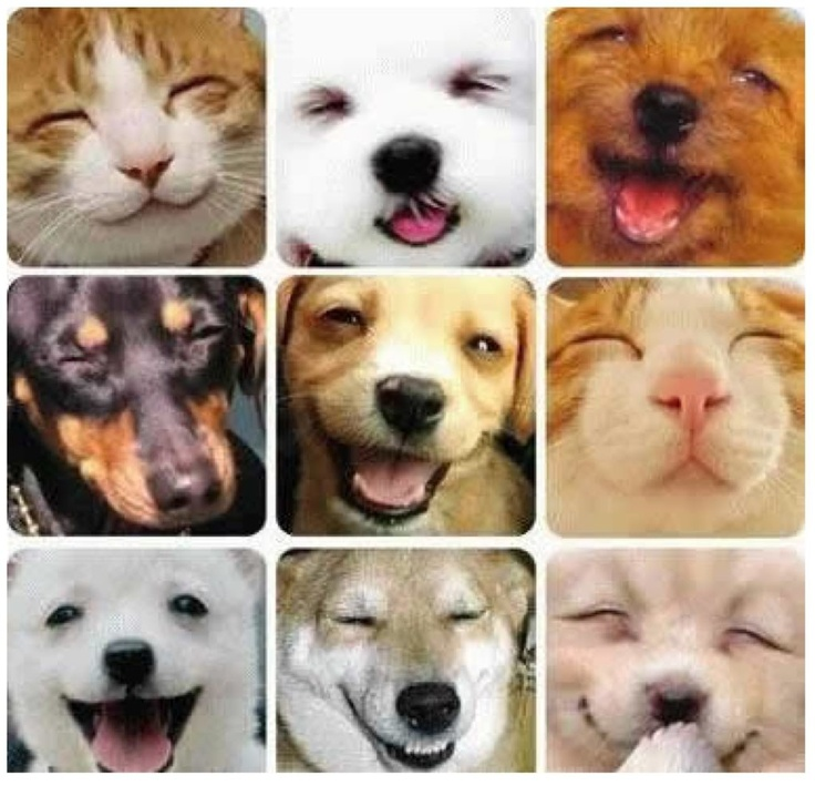 Smiling cats and dogs | Puppys! +Dogs! | Pinterest