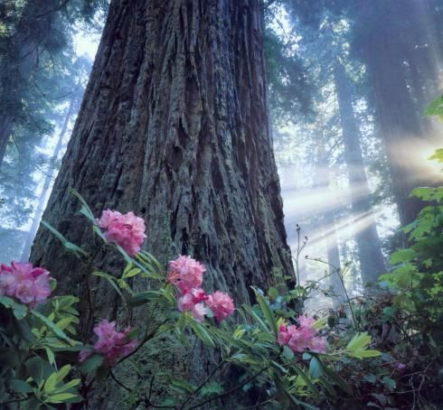 Planting Under Redwood Trees Semi Shady Acidic Loving