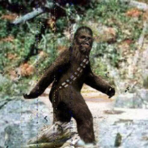 this is the real picture of the bigfoot they say were real, actually just Chewy goin for a walk