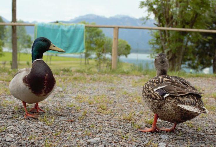 Besuch am Forggensee