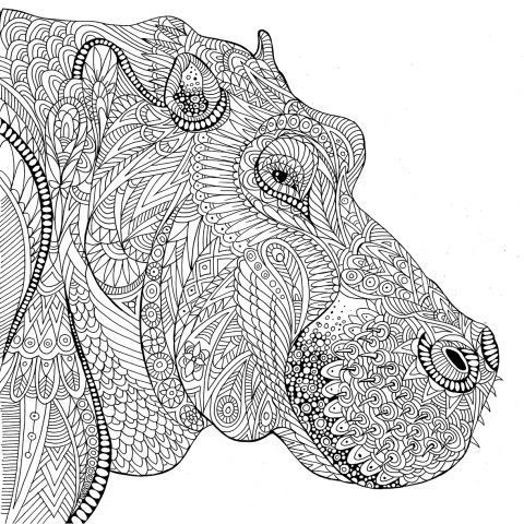Hippo coloring pages of all kinds amazon ~ 987 best Zentangle dieren images on Pinterest | Coloring ...