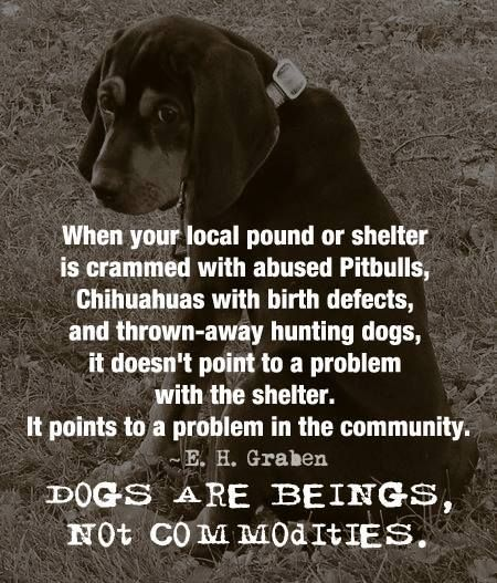 Is there a problem in your community? Volunteer. Donate. Foster. Rescue. ADOPT your next furry friend..... be part of the solution!: