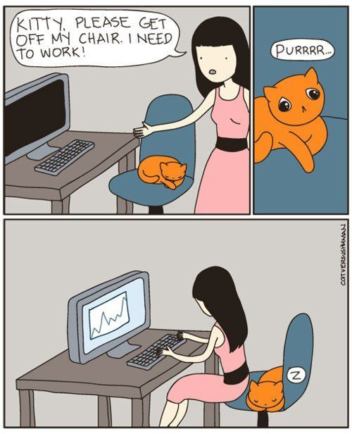working with a cat