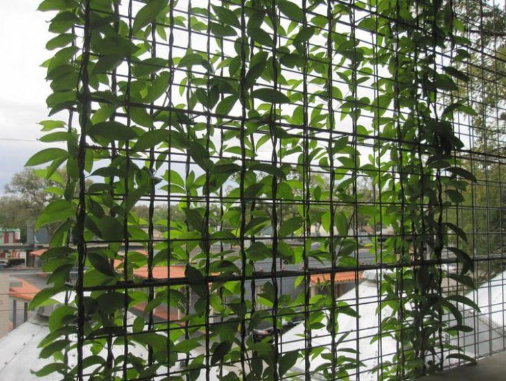 trellis garden screening ideas