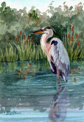 Zeh Original Art Blog Watercolor and Oil Paintings: Great Blue Heron