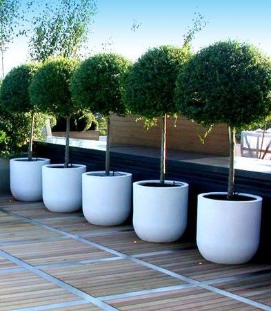 37. Bay trees in Urbis Drum planters. Could be under planted with lavender if planted in the sunniest part of the garden.