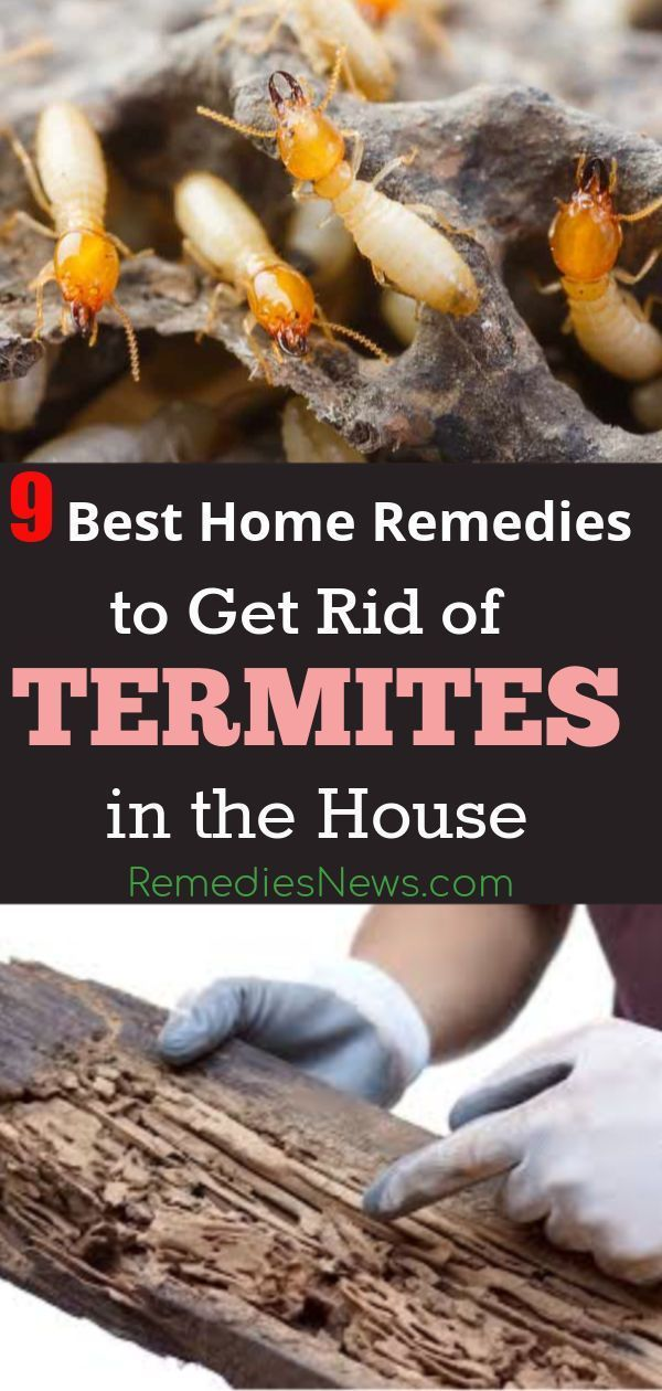47b8fb540d016de9f93035ee2257eb5c - How To Get Rid Of Termites Permanently At Home