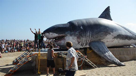 Inflatable Shark,