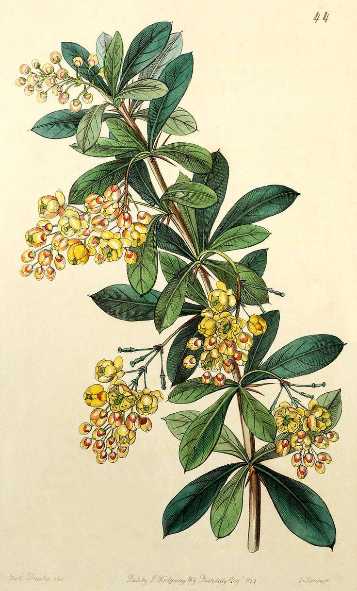 30 best flowers mostly images on pinterest botanical art for Oregon craft floral