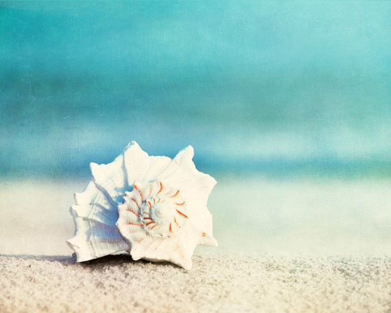 "Beach Photography, seashell conch shell print aqua blue white beige seashore ocean sea coastal wall art - 11x14, 8x10 Photograph, ""Paradise"""
