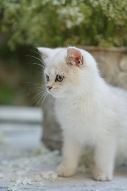 """An inquisitive kitten is the best reminder of what youth is about."" --Unknown Author"