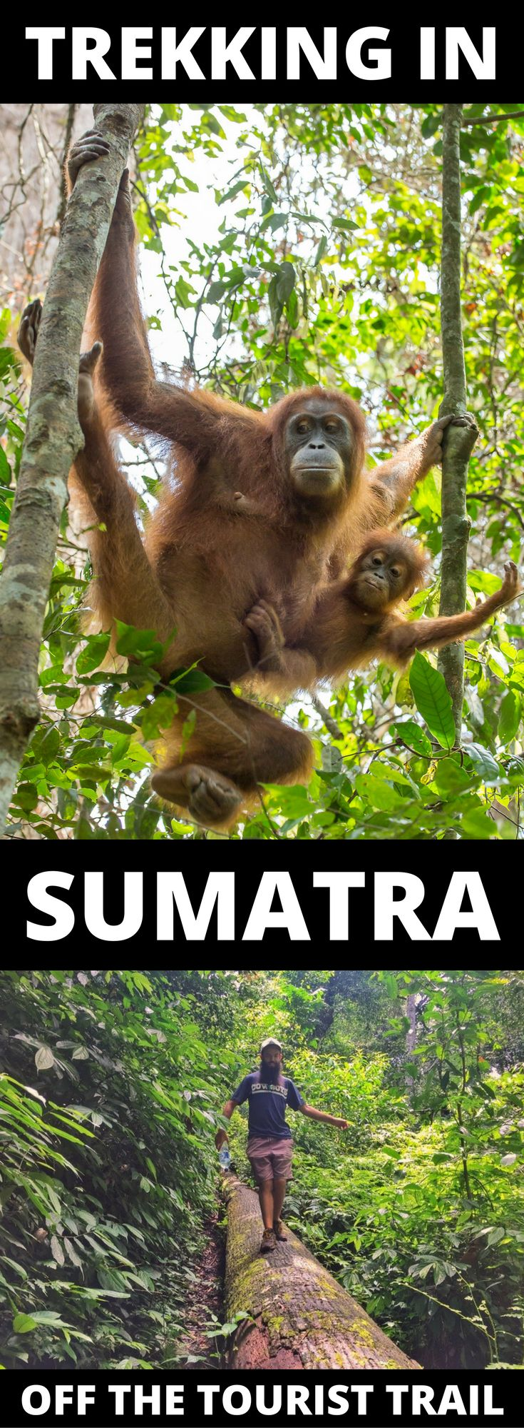 Visit Sumatra! In Gunung Leuser NP the best thing to do is see Orangutans but rather than in Bukit Lawang, go to Ketambe where you can see them 'wild'