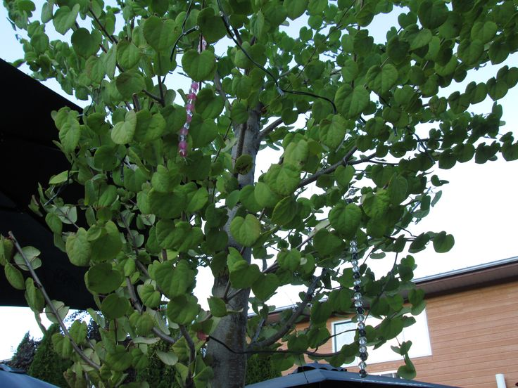 See the tree how big its grown, but friends it hasn't been too long since..... fa la la