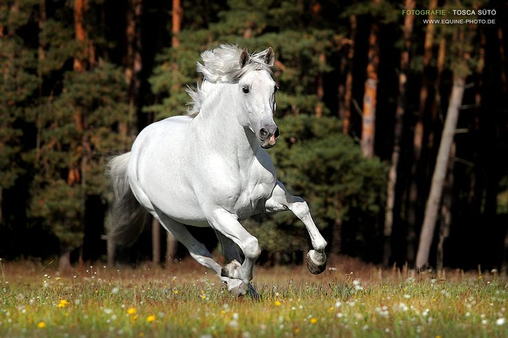Horse galloping... wouldn't it be great to find happiness that easily...