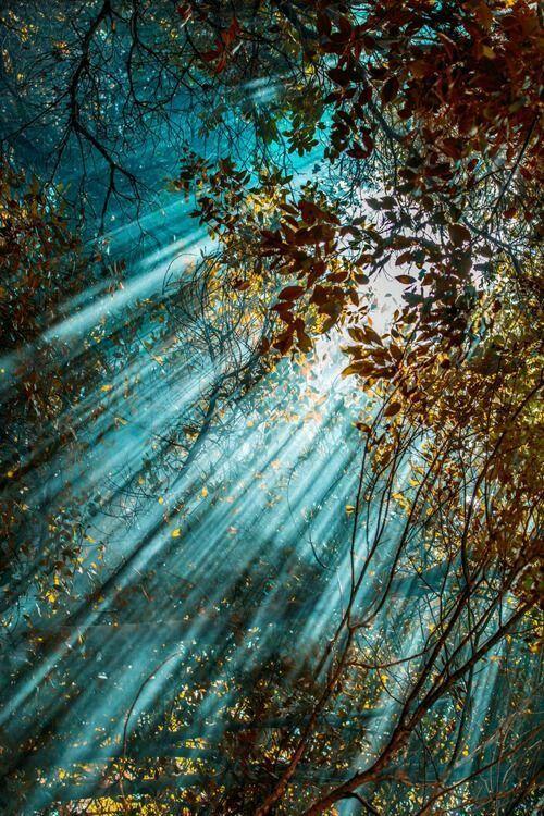 Gorgeous sunbeams ❤