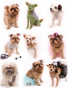 how to make dog costume