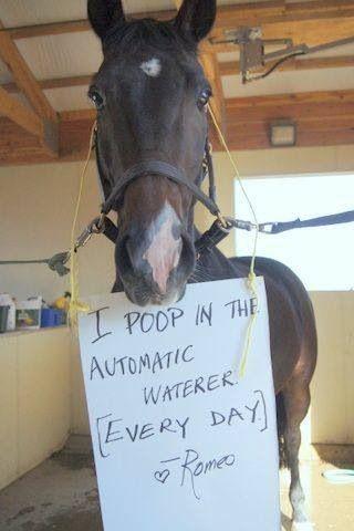 Horse Shaming