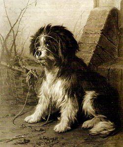 Schapendoes door C. Cunaeus 1825 -1895