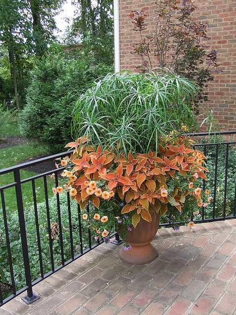 find this pin and more on container gardening ideas