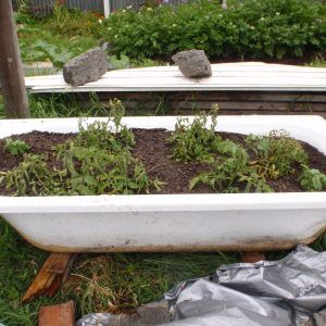 Old Bathtubs As Planters