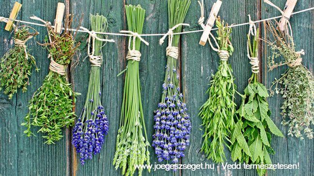 Már dédanyáink is használták a gyógynövényeket, merj Te is hozzájuk fordulni bátran!